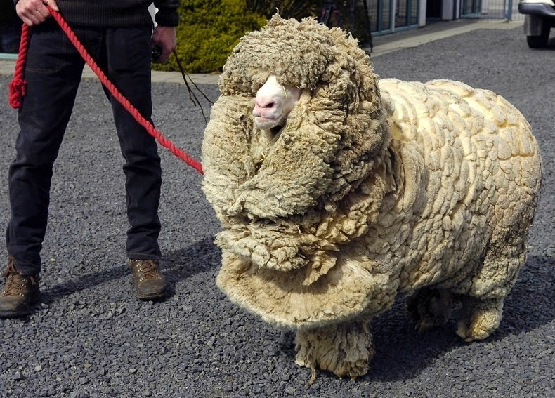 10-reasons-why-shrek-the-sheep-is-not-just-any-ordinary-sheep-5-is-incredibly-unbelievable